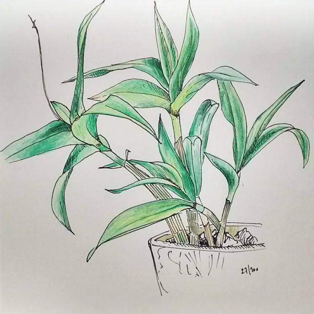 small orchid color pencil drawing