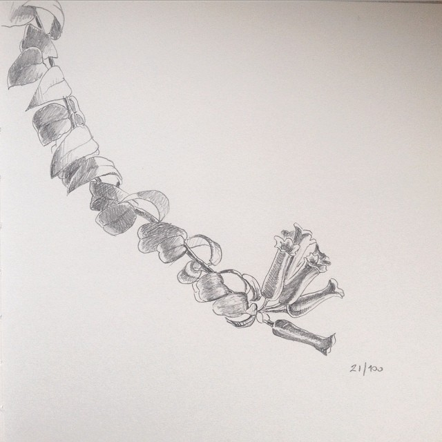 aeschynanthus branch pencil drawing