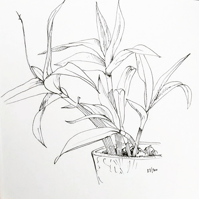 small orchid pencil drawing
