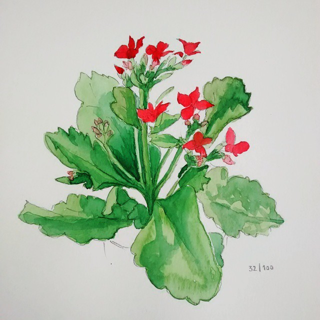 kalanchoe watercolor