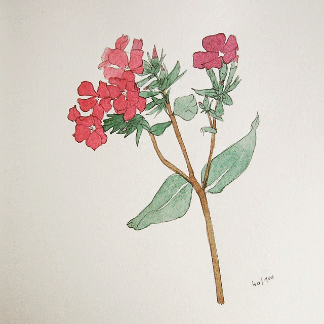 pink flower watercolor