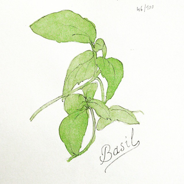 basil watercolor