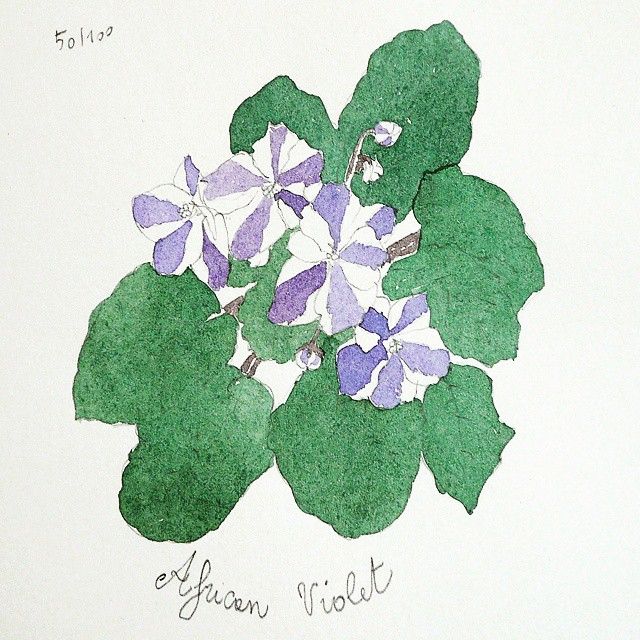 african violet watercolor