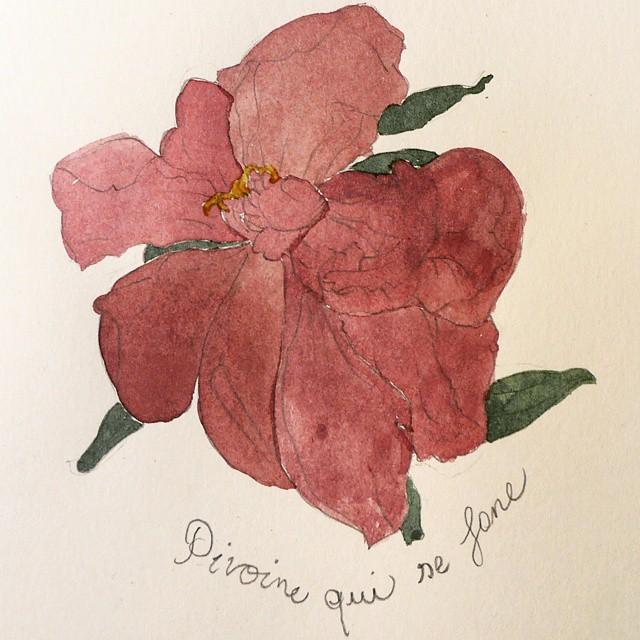 peony plain watercolor