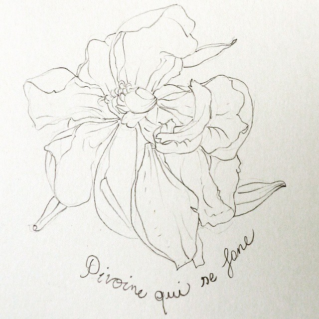 peony pencil drawing