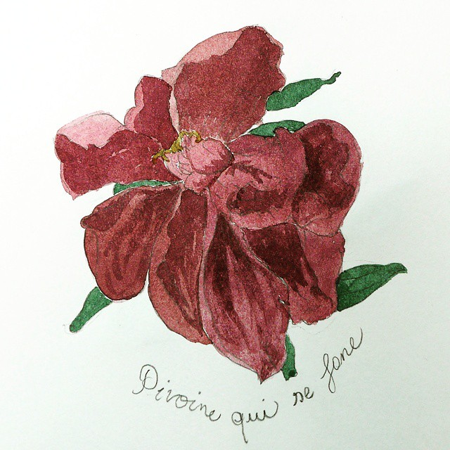 peony watercolor with shades